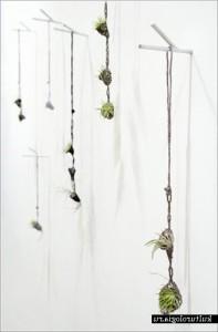 ожерелье из растений