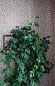 цветок на стене