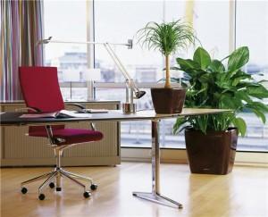 как украсить рабочее место