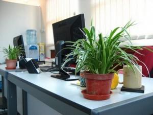 цветы на рабочем месте