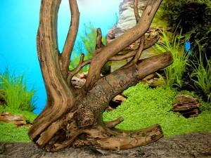как украсить аквариум?