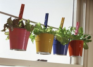 импровизированный сад на окне