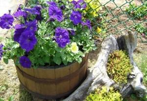 пример оформление сада корягами
