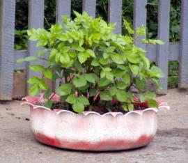 как сделать клумбы для сада из шин