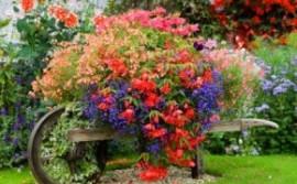 украшаем сад цветами